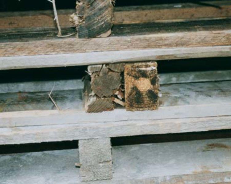 Paletten mit 2 reparierten nebeneinanderliegenden Kanthölzern